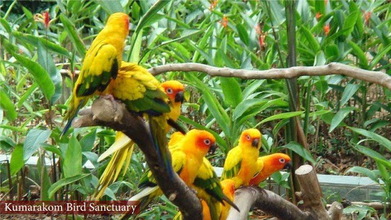Kumarakom Bird Sanctuary, Kumarakom