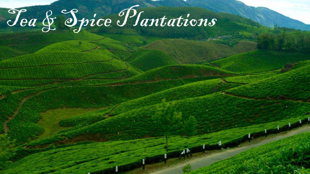 Tea & Spice Plantations, Devikulam,Kerala