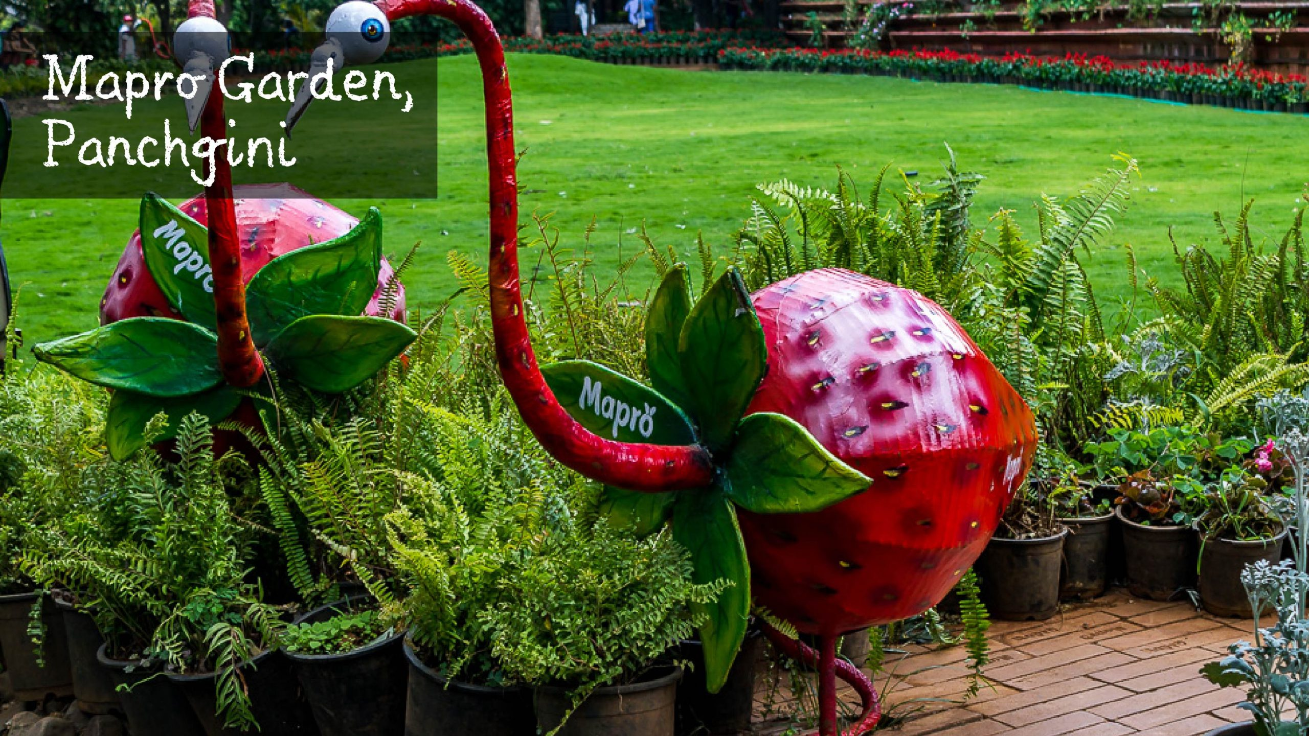 Mapro Garden Panchgani Maharashtra