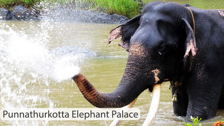 Punnathurkotta Elephant Palace,Kerala