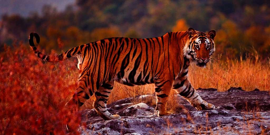 best tourist places in Karnataka,, Bandipur National Park – Explore the Rare Animal Species